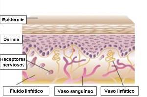 Ilustración que muestra la composición y forma de la piel antes de la aplicación del Kinesiotaping.