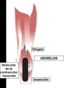 principios-vendaje-neuromuscular